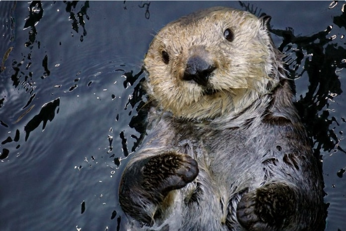 15 смешных отзывов о животных, если бы мы покупали их онлайн! Часть II рис 12