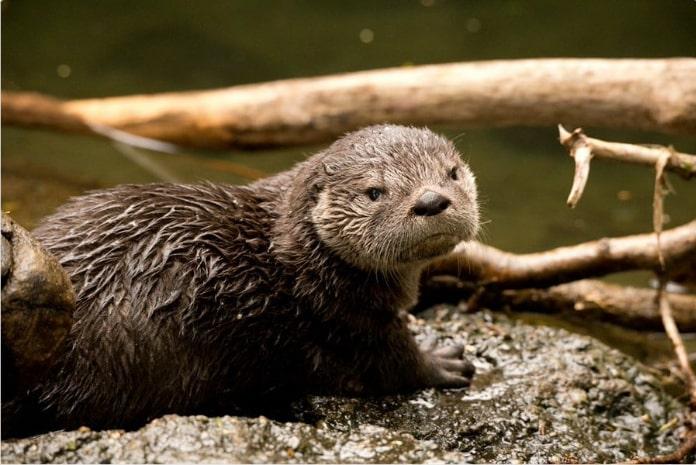 15 смешных отзывов о животных, если бы мы покупали их онлайн! рис 6