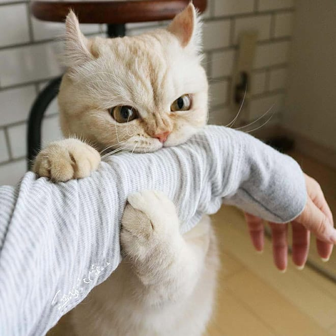 15 котов, которых хлебом не корми, дай укусить что-нибудь! рис 15