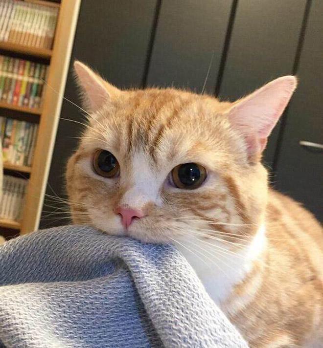 15 котов, которых хлебом не корми, дай укусить что-нибудь! рис 5