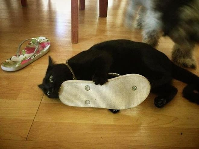 15 котов, которых хлебом не корми, дай укусить что-нибудь! рис 4