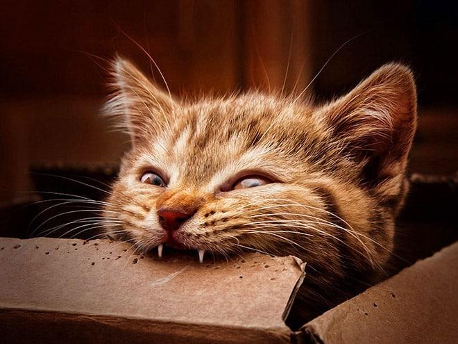 15 котов, которых хлебом не корми, дай укусить что-нибудь! рис 11