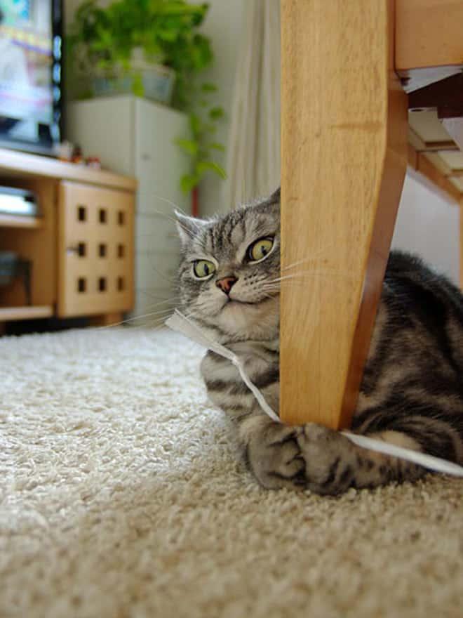 15 котов, которых хлебом не корми, дай укусить что-нибудь! рис 9