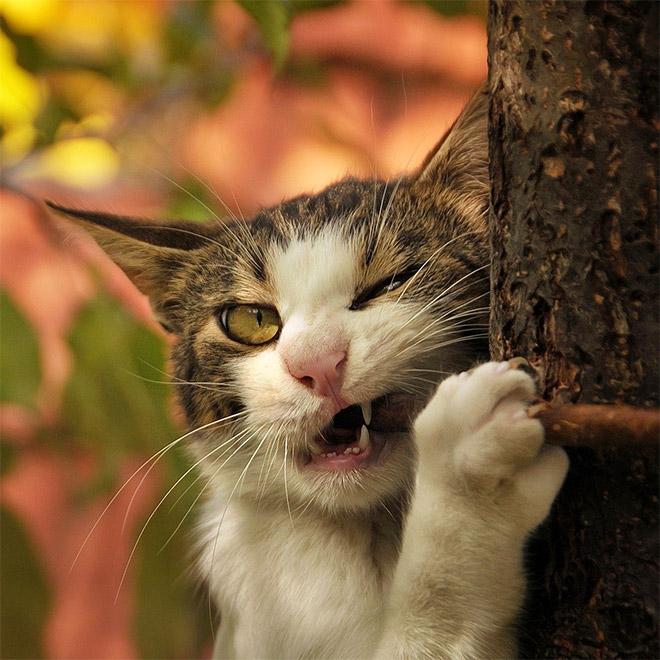 15 котов, которых хлебом не корми, дай укусить что-нибудь! рис 7
