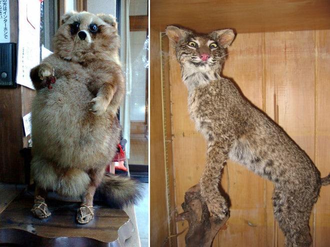 20 упоротых чучел животных со всего интернета!