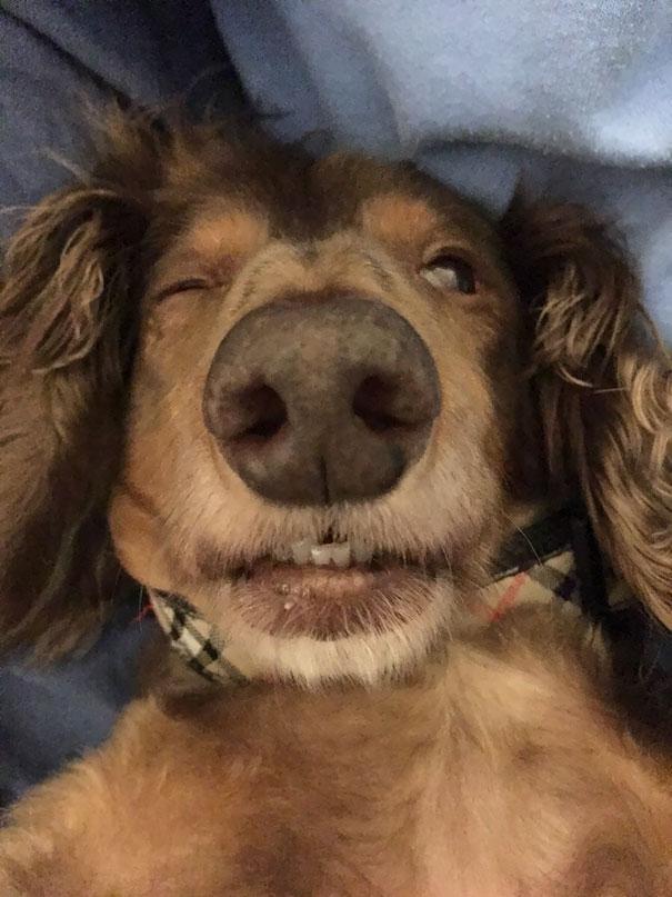 17+ смешных фото животных, вернувшихся от ветеринара домой. Часть II