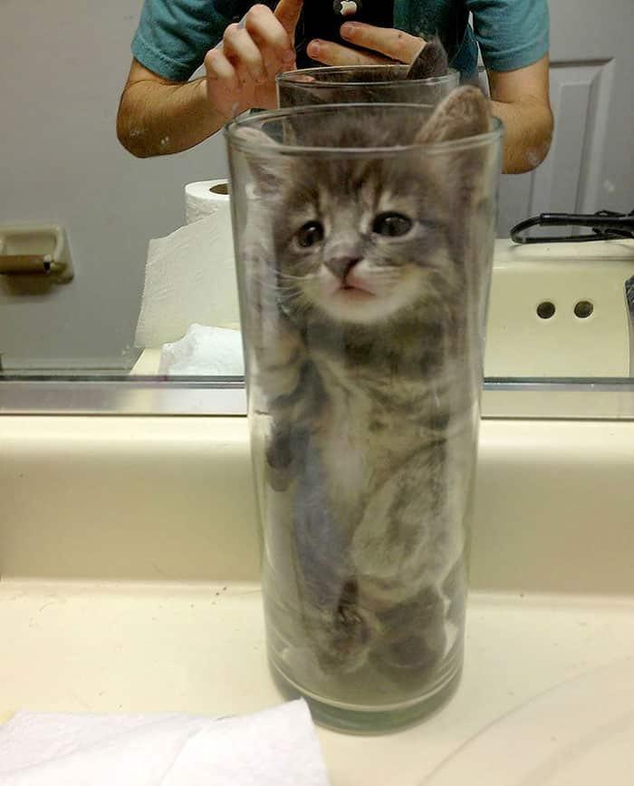 funny-liquid рис 14