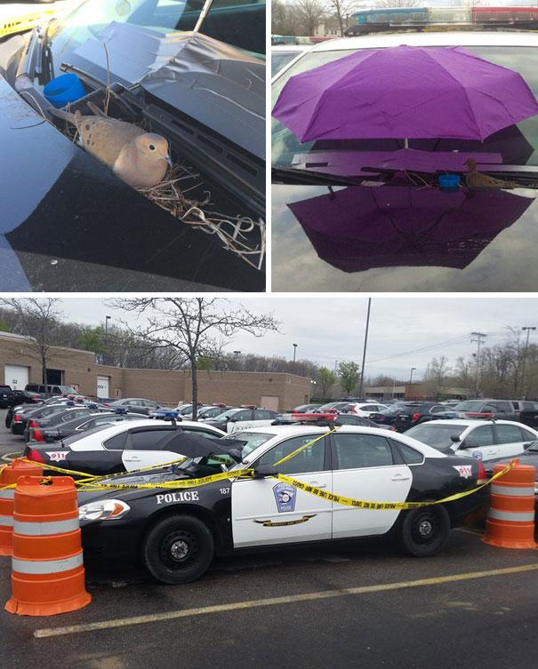 20+ доказательств, что у полицейских отличное чувство юмора! рис 13