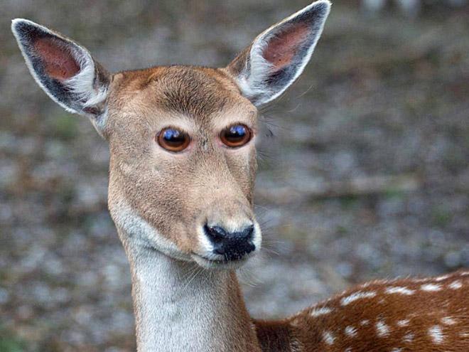 Как бы выглядели эти 20 животных с глазами спереди! рис 20