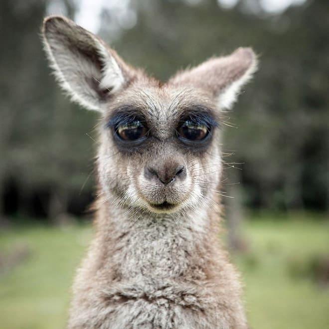 Как бы выглядели эти 20 животных с глазами спереди! рис 9