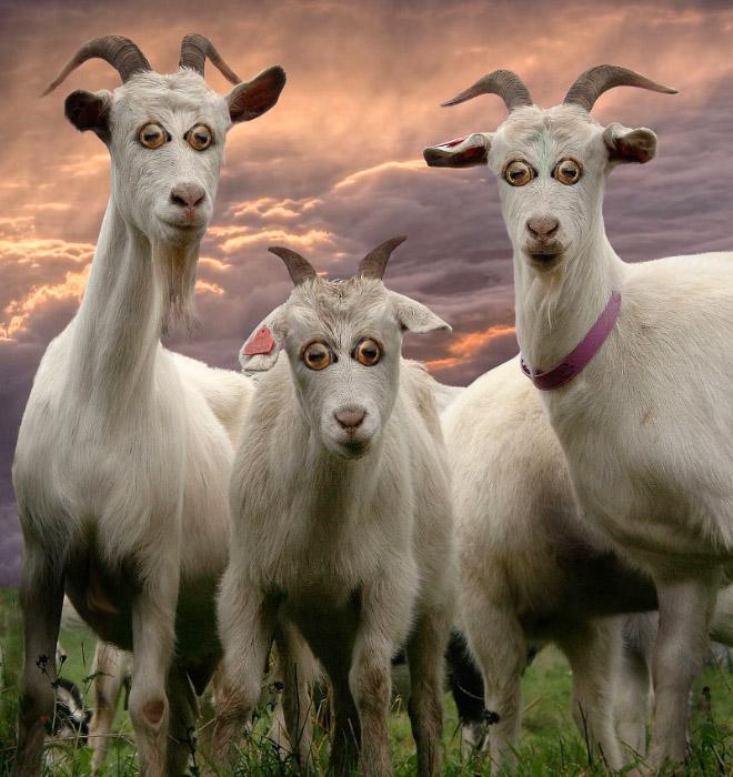 Как бы выглядели эти 20 животных с глазами спереди! рис 16