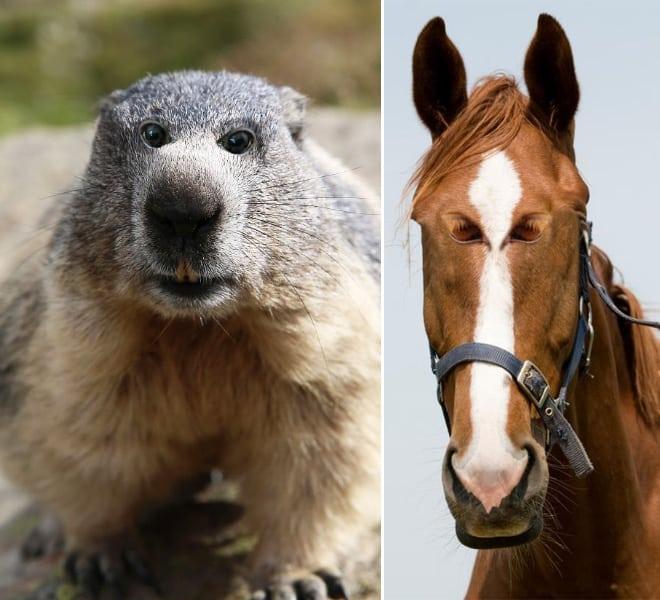 Как бы выглядели эти 20 животных с глазами спереди! рис 13