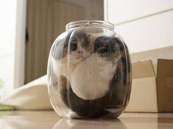 20 неоспоримых доказательств того, что коты все-таки жидкость! рис 12