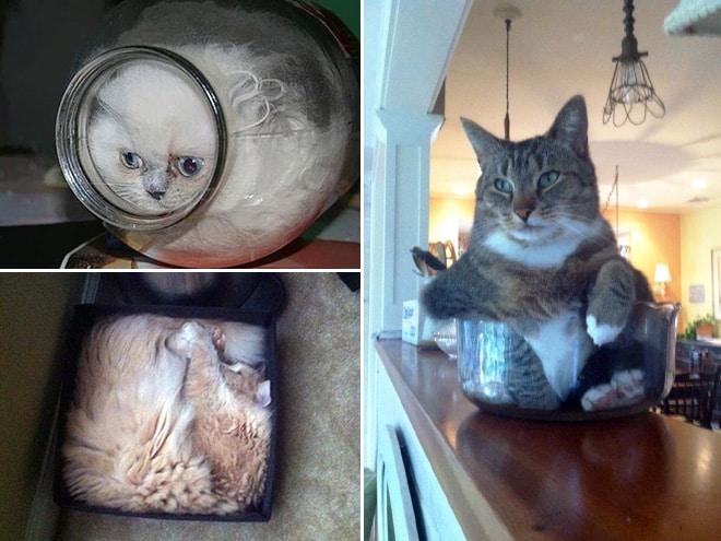 20 неоспоримых доказательств того, что коты все-таки жидкость! рис 3