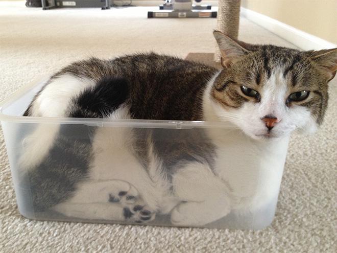 20 неоспоримых доказательств того, что коты все-таки жидкость! рис 6
