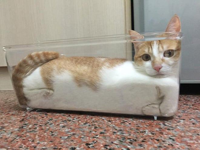 20 неоспоримых доказательств того, что коты все-таки жидкость! рис 19