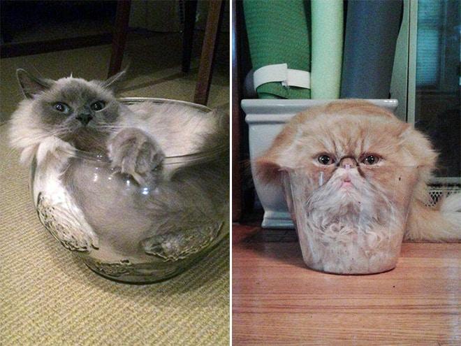 20 неоспоримых доказательств того, что коты все-таки жидкость! рис 18
