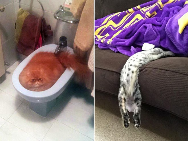 20 неоспоримых доказательств того, что коты все-таки жидкость! рис 16