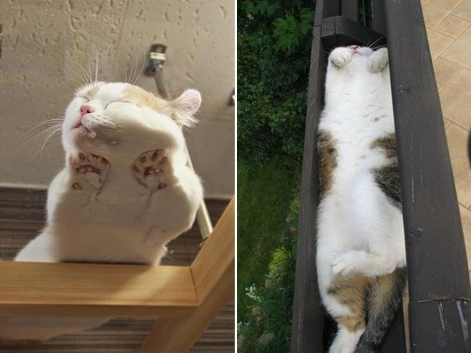 20 неоспоримых доказательств того, что коты все-таки жидкость! рис 4