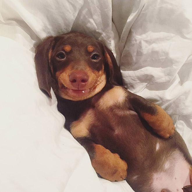 18 собак-улыбак со всего интернета! рис 7