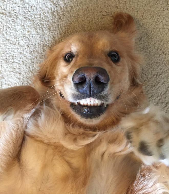 18 собак-улыбак со всего интернета! рис 4