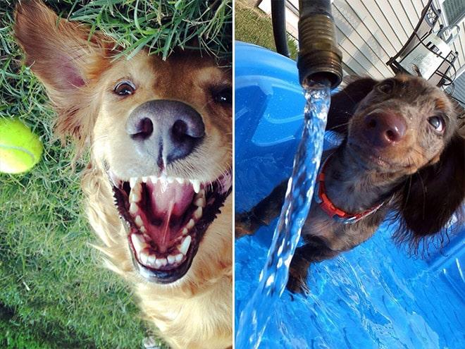 18 собак-улыбак со всего интернета! рис 3