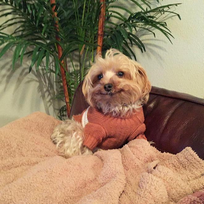 18 собак-улыбак со всего интернета! рис 2