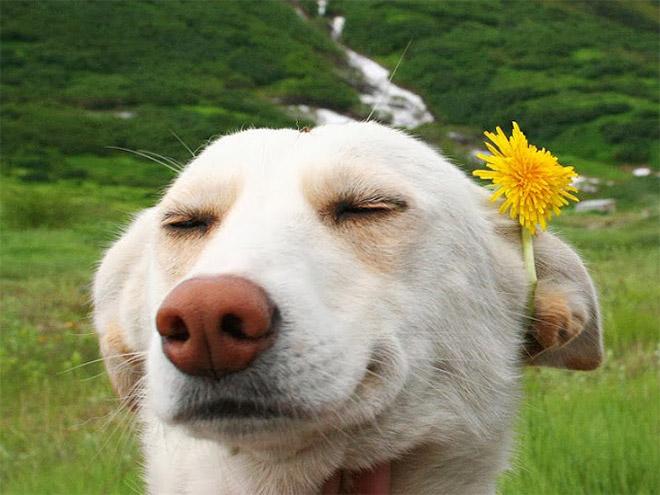 18 собак-улыбак со всего интернета! рис 17