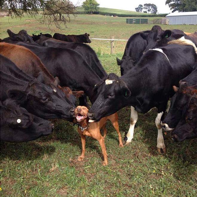 18 собак-улыбак со всего интернета! рис 16