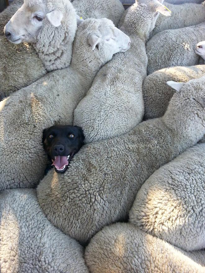 18 собак-улыбак со всего интернета! рис 15