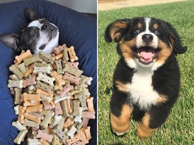 18 собак-улыбак со всего интернета! рис 14