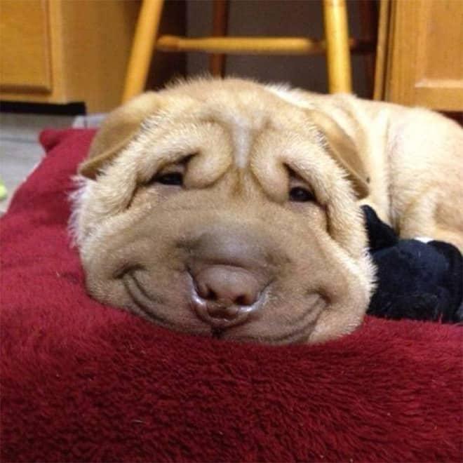 18 собак-улыбак со всего интернета! рис 10
