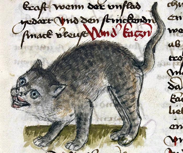 10 + фото, смешных котов Средневековья! рис 8