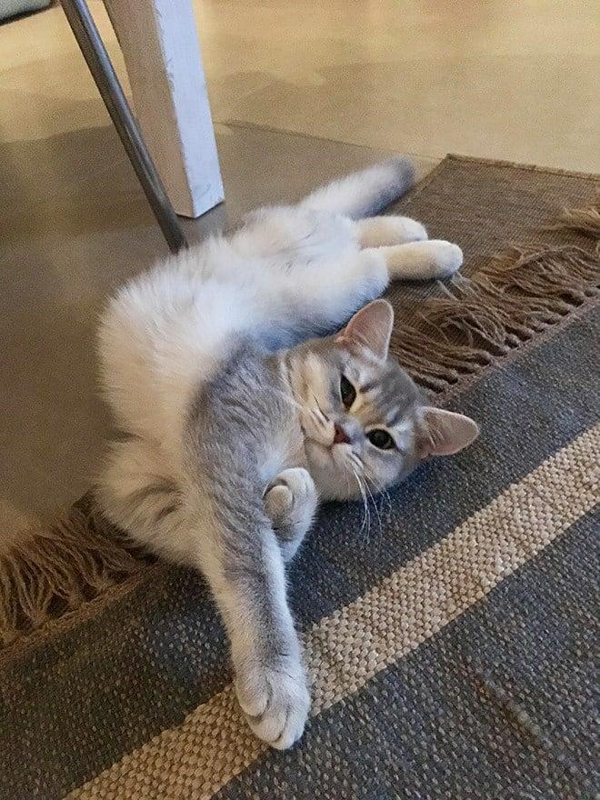 17 котов, в совершенстве овладевших искусством сна! рис 6
