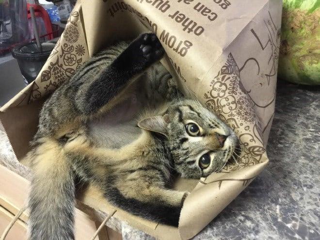 17 котов, в совершенстве овладевших искусством сна! рис 5