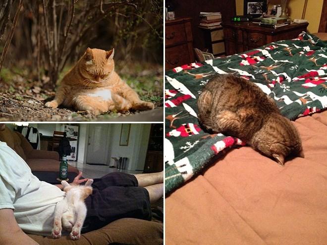 17 котов, в совершенстве овладевших искусством сна! рис 11