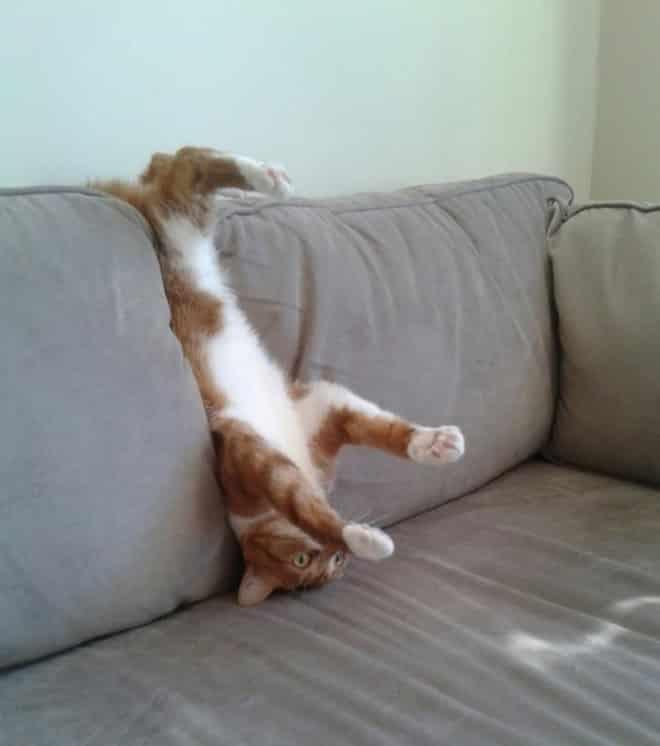17 котов, в совершенстве овладевших искусством сна! рис 10