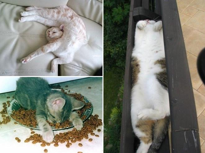 17 котов, в совершенстве овладевших искусством сна! рис 9