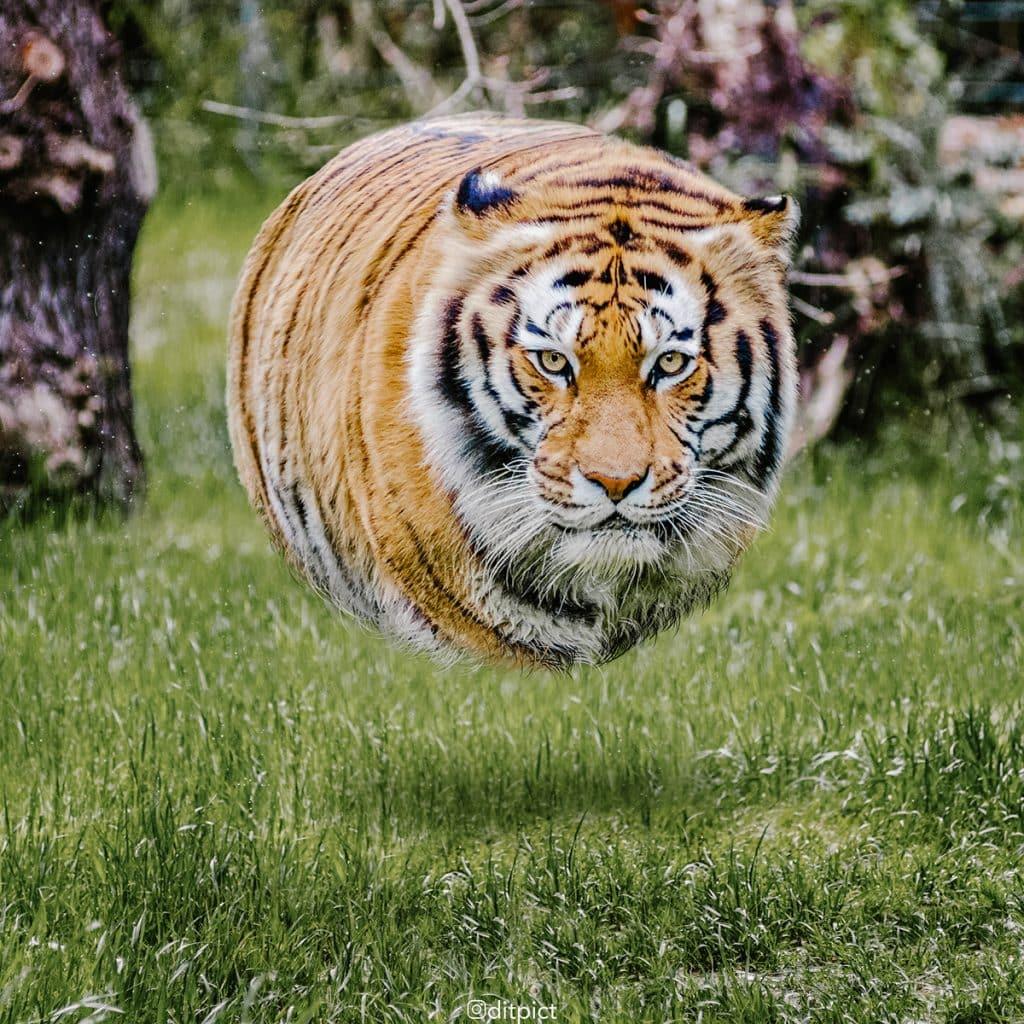 Фотограф превратил животных в воздушные шарики! Не спрашивайте ЗАЧЕМ, просто наслаждайтесь!