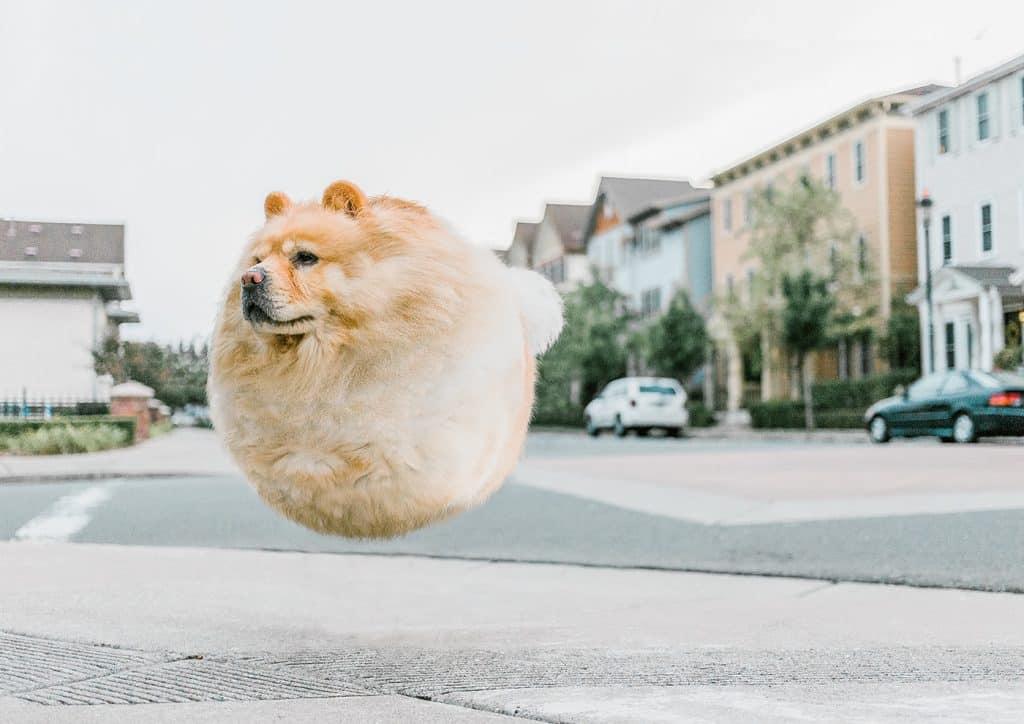 Фотограф превратил животных в воздушные шарики! Не спрашивайте ЗАЧЕМ, просто наслаждайтесь! рис 10