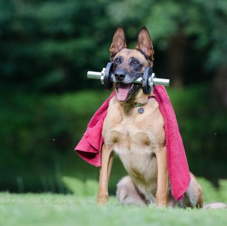 16 собак, которые готовы достать для своего хозяина все что угодно. рис 3