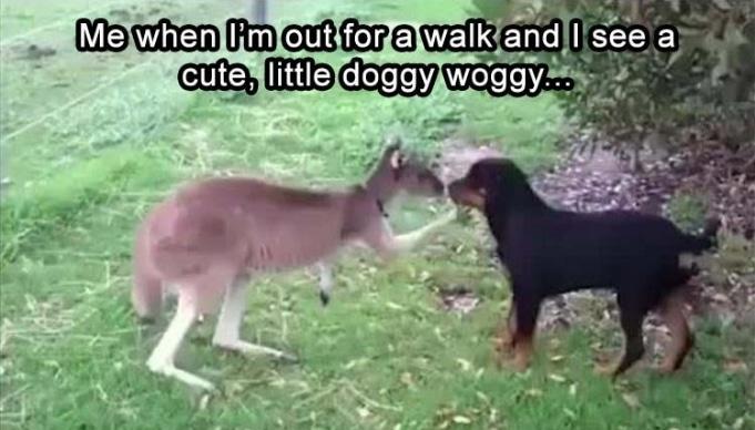"""10 мемов с животными, глядя на которые вы скажете: """"Да это же обо мне!"""" рис 6"""
