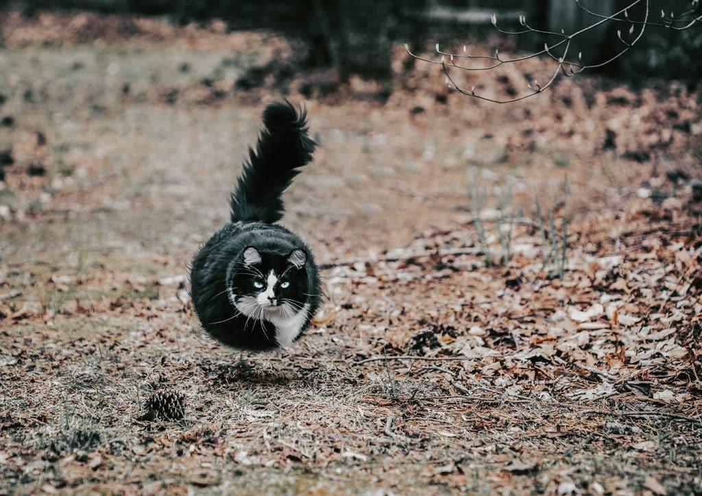 Фотограф превратил животных в воздушные шарики! Не спрашивайте ЗАЧЕМ, просто наслаждайтесь! рис 3