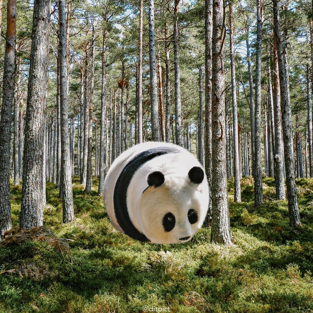 Фотограф превратил животных в воздушные шарики! Не спрашивайте ЗАЧЕМ, просто наслаждайтесь! рис 6