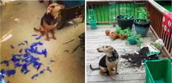 """19 собак, которые """"отличились и спалились""""! рис 14"""