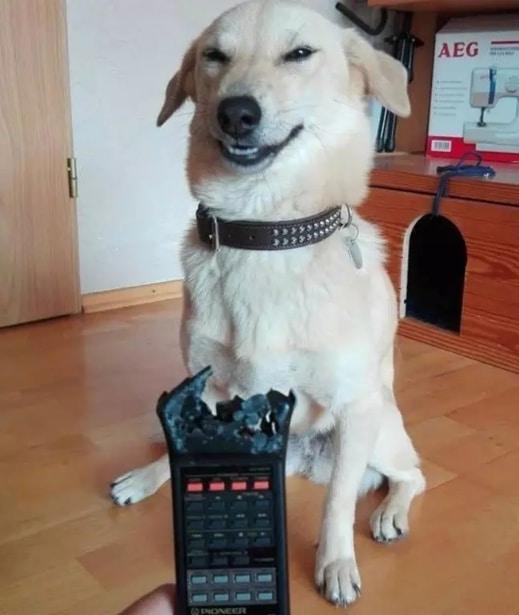 """19 собак, которые """"отличились и спалились""""! рис 5"""