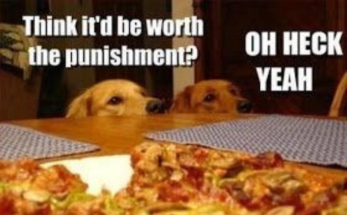 14 кошек и собак, которые без ума от пиццы! рис 2