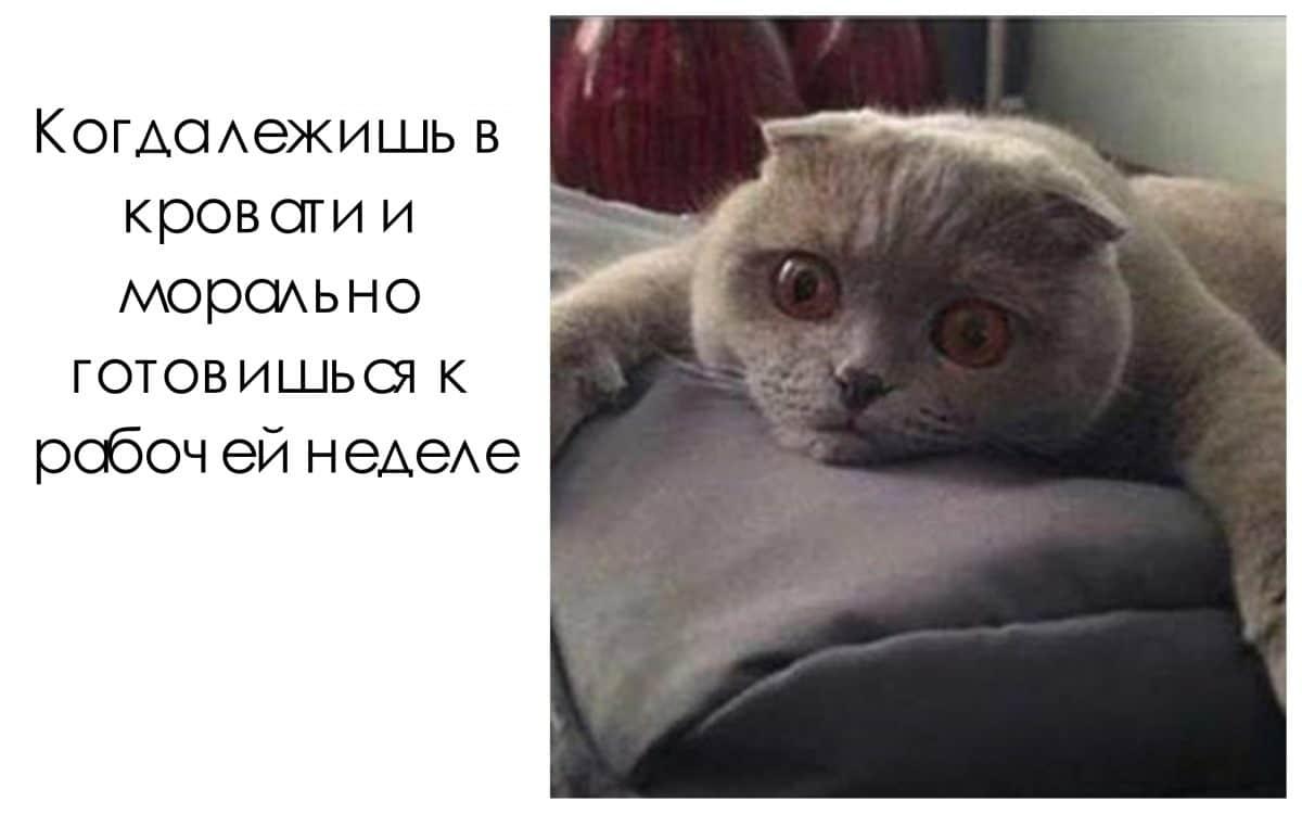 """10 мемов с животными, глядя на которые вы скажете: """"Да это же обо мне!"""""""
