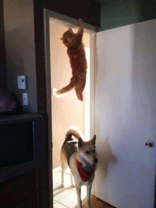 16+ котов, которые пожалели о своем решении... рис 11