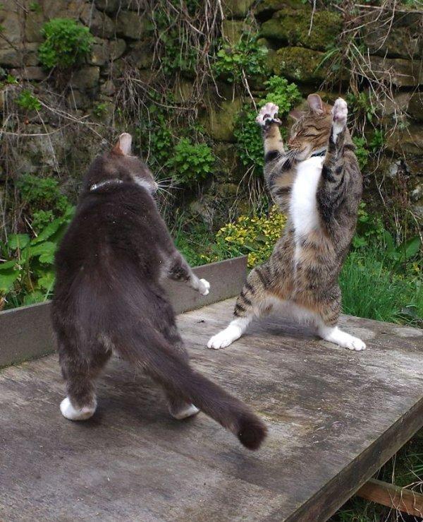 20 котов, которые пустились с места в пляс!
